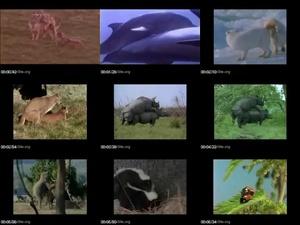 Animal Fuck Mix - ArtOfZoo.Org - Bestiality Life